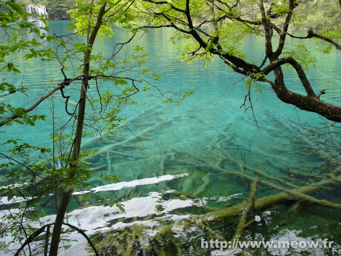 Jiuzhaigou - Trunks
