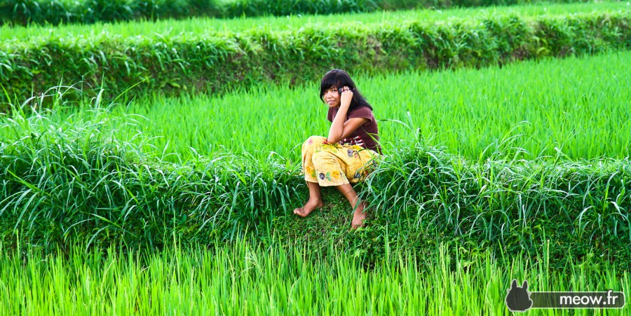 Rice Field Modern Girl